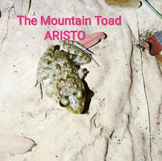 The Mountain Toad; ARISTO