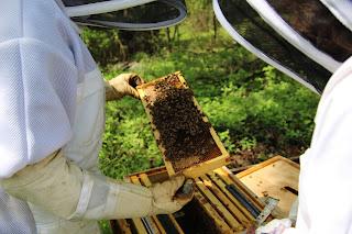PLC Beekeeping Class 5/20/18 - IMG_8122.JPG