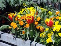 On the Flower Bridge