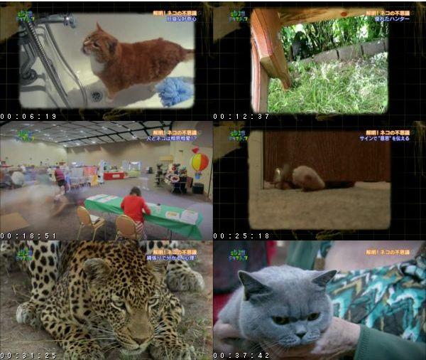 [TV-Variety] 地球ドラマチック選「解明!ネコの不思議」 – 2016.02.26