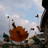 Gardening 2012 - 115_2167.JPG
