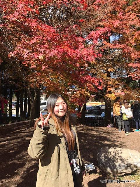 2016年 台中市和平區追楓實錄 福壽山農場 賞楓遊記 楓樹槭樹區分 攝影 民生資訊分享
