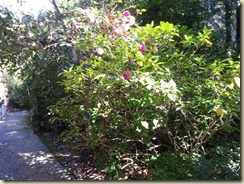 20151030_Magnolia Plantation (Small)