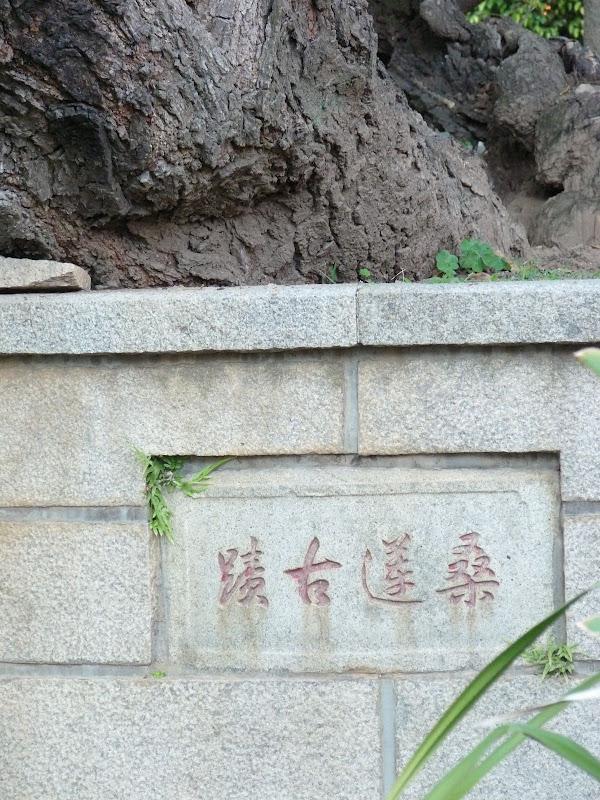 Quanzhou.Le nom de cet arbre