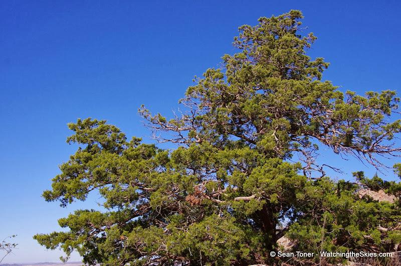 11-09-13 Wichita Mountains Wildlife Refuge - IMGP0368.JPG