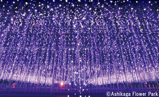 Illuminate Your Holidays in Japan This Winter! 2