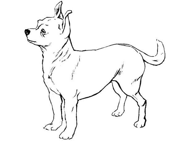 Chihuahua Coloring Pages Only Coloring Pages