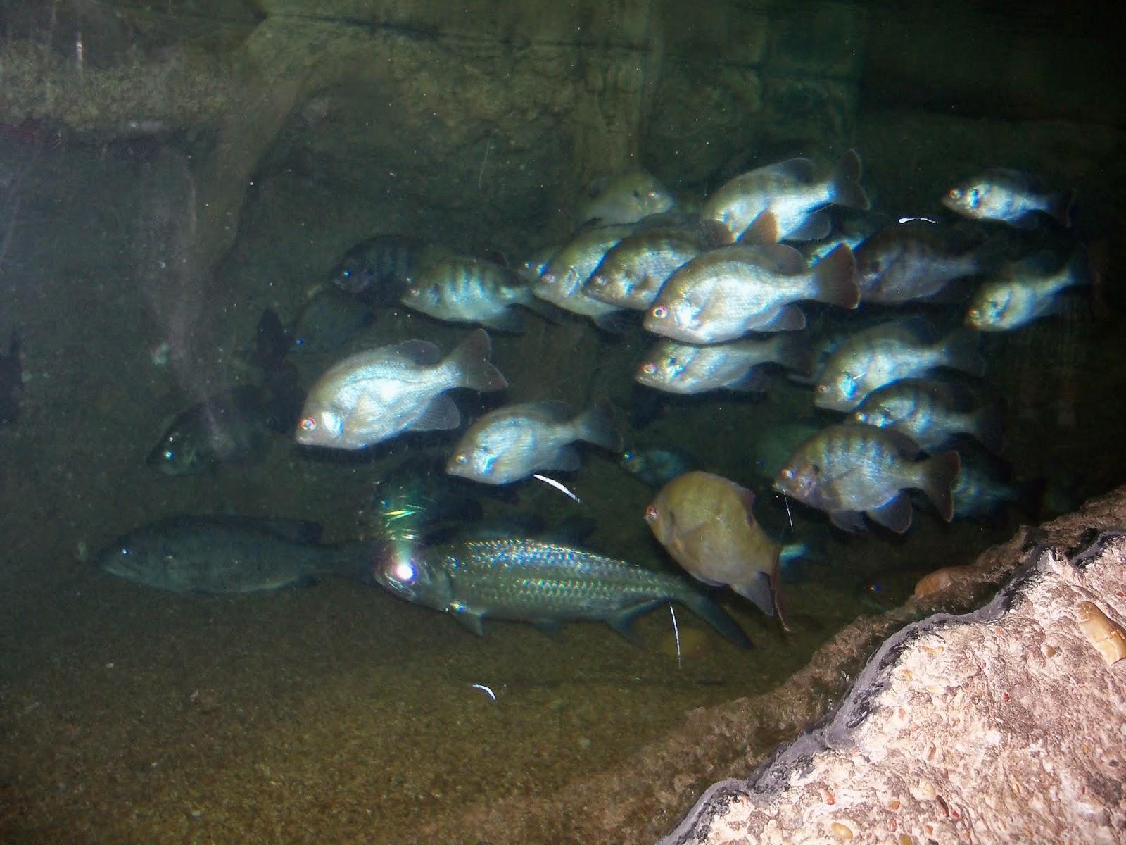 Downtown Aquarium - 116_3844.JPG