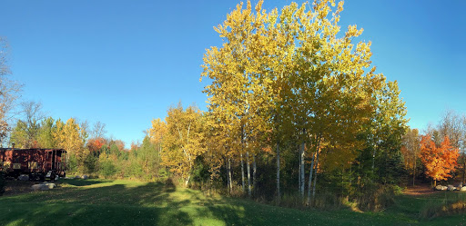 Fall scene near the ice skating rink. The poplar trees near their peak, tamarack trees just starting to show signs of  change.