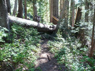 A little blow-down trail obstruction