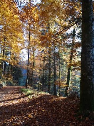 Arboretum du Vallon de l'Aubonne