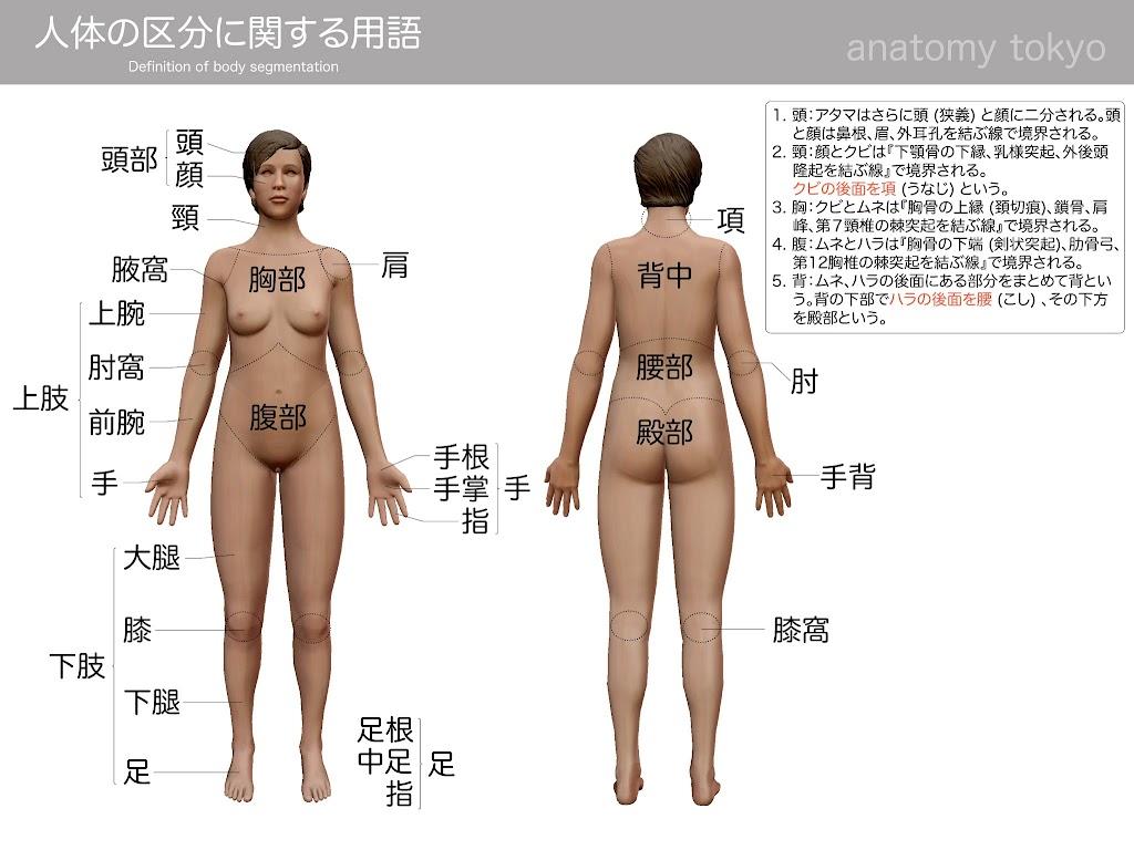 2017-a16-definition-of-body-segmentation.jpg