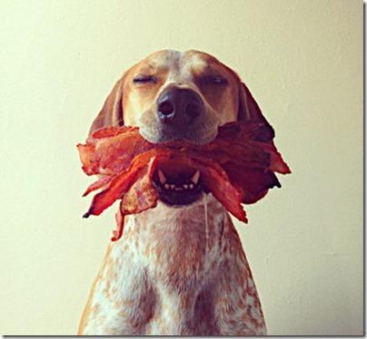 restraineddog with bacon