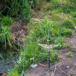 20140724_Fishing_Basiv_Kut_005.jpg