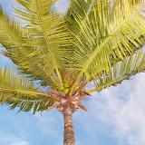 Key West Vacation - 116_5551.JPG