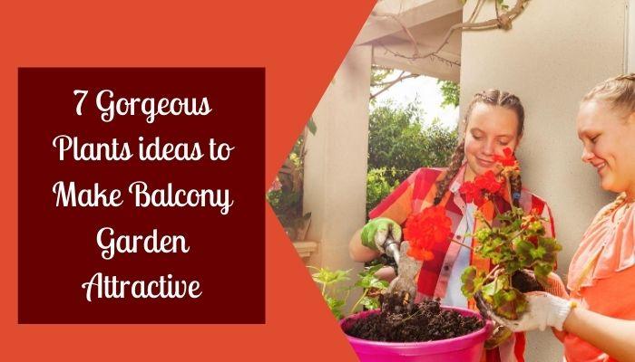 7 Gorgeous Plants ideas to Make Balcony Garden Attractive