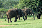 Er det mon muligt, at få sig en ridetur på afrikanske elefanter?