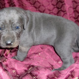 Beverlin blue girl @ 3 weeks