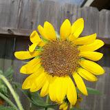 Gardening 2011 - 101_0010.JPG