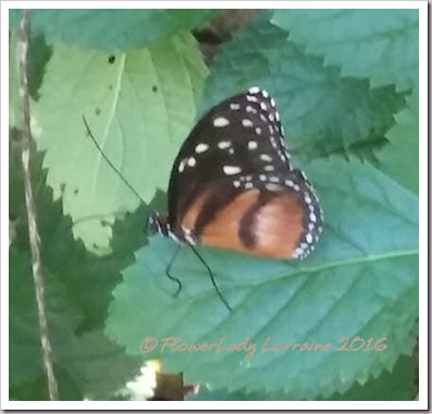 10-22-butterfly