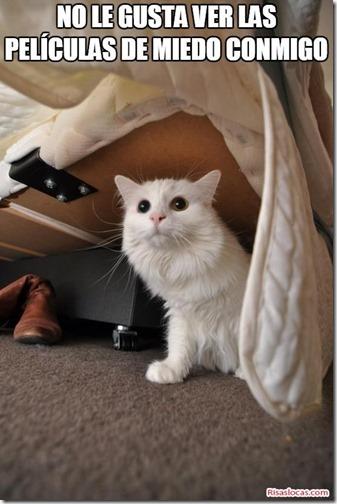 humor gatos (12)