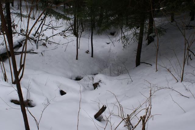 Zajęcia terenowe 29 lutego 2012 - DSC06209_1.JPG