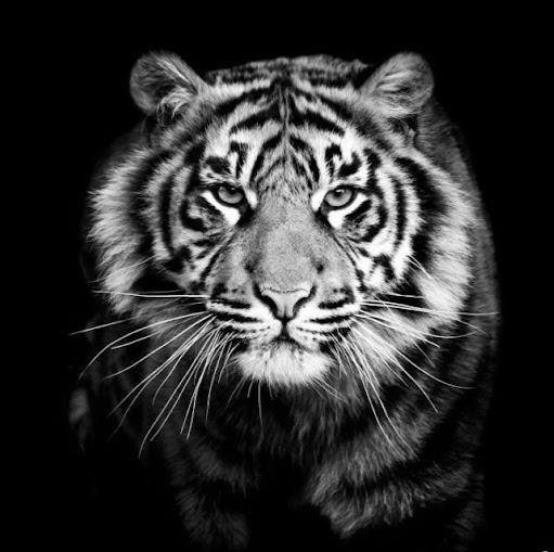 user Zach Mangialomini apkdeer profile image