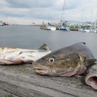Výprava na ryby