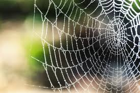 How to prevent cobwebs at home