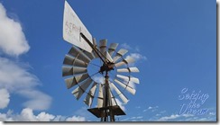Windmill Top