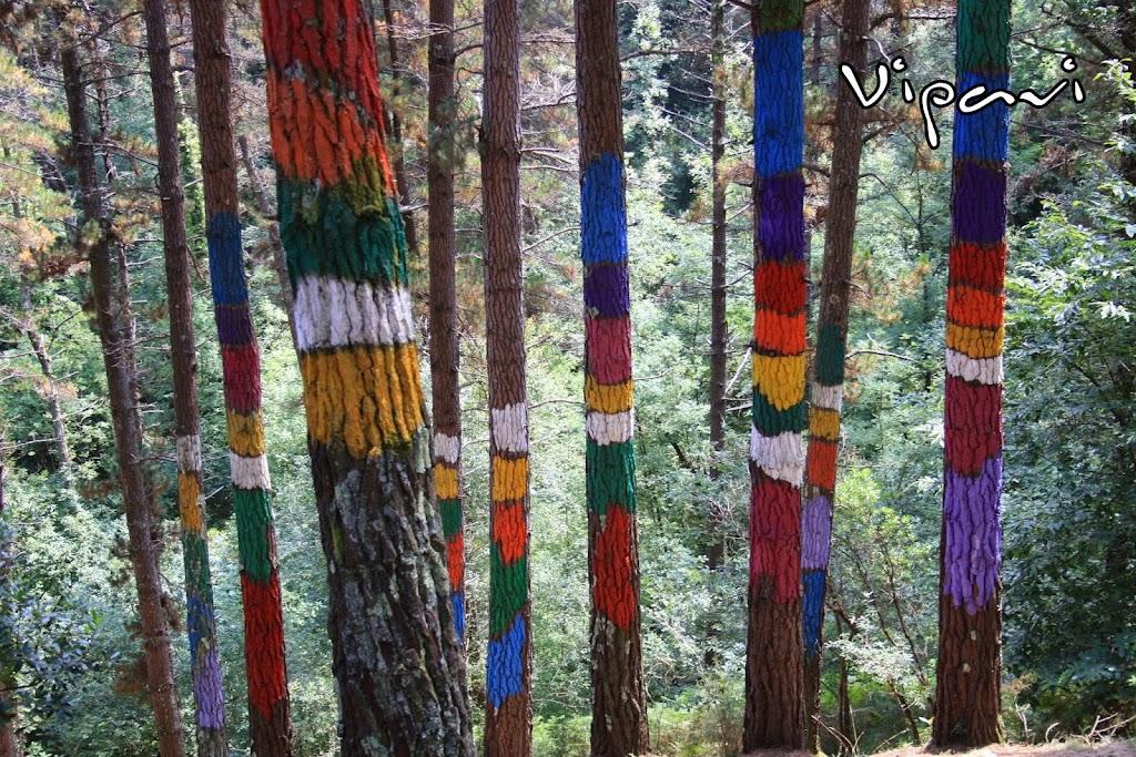 El bosque pintado de Oma en Kortezubi (Vizcaya)