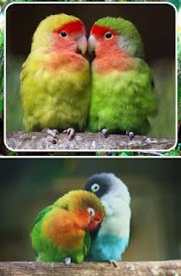 dating site for fugle elskere hvordan begyndte du at danse igen