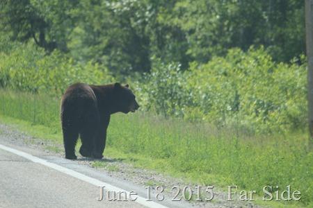 June 19 2015 Bear