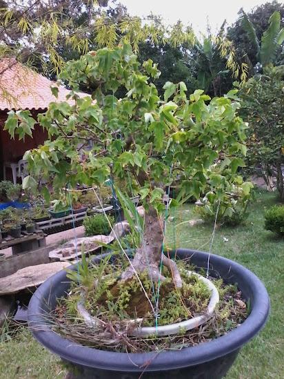 Troll Apedêuta Rural- Prés a venda... 20150202_174358