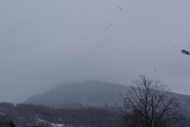 Zajęcia terenowe 29 lutego 2012 - DSC06168_1.JPG