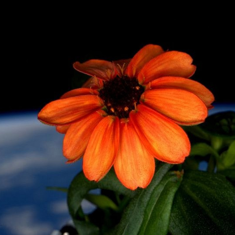 The First Flower Blooms in Space