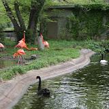 Zoo Snooze 2015 - IMG_7327.JPG