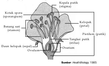 Tumbuhan biji tertutup (Angiospermae) - Klasifikasi, Sifat,Contoh