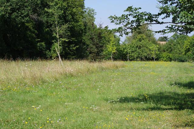 """Le """"pré entomologique"""" le 21 août 2012. Les Hautes-Lisières (Rouvres, 28). Photo : J.-M. Gayman"""