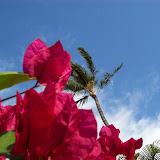 Hawaii Day 6 - 100_7618.JPG