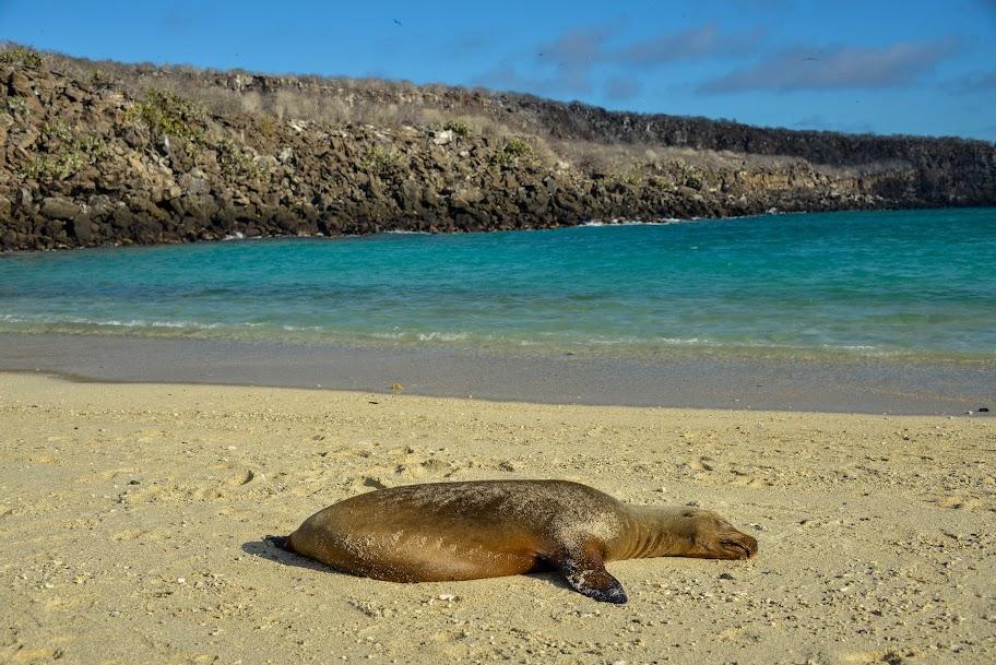 galapagos - Galapagos_FB_2-76.jpg