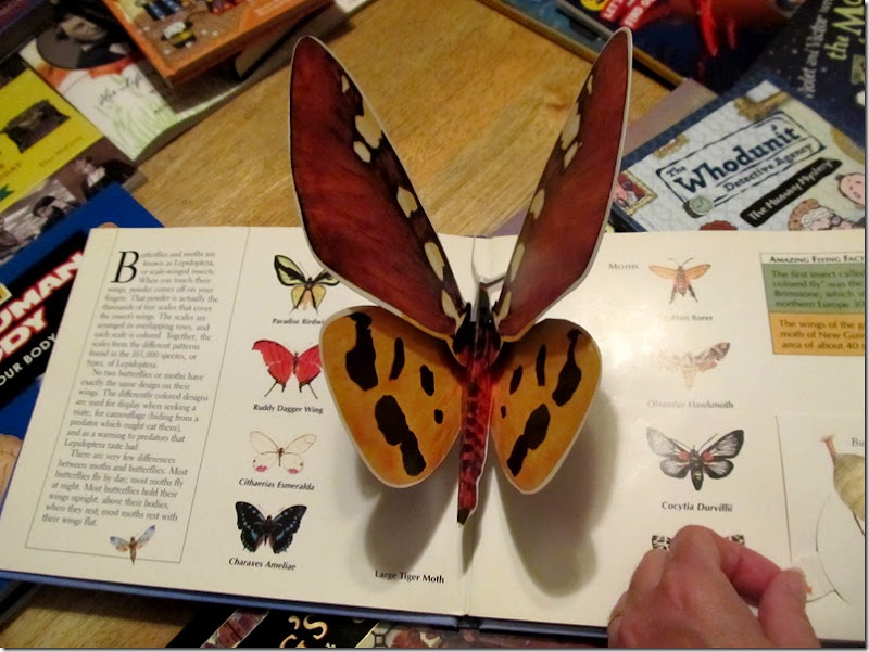Wings: A Pop-Up Book of things that fly  butterfly
