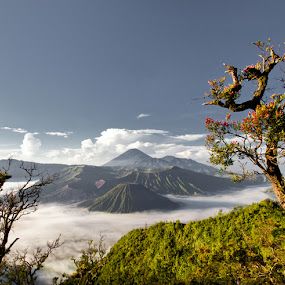bromo by Asep Dedo - Landscapes Mountains & Hills