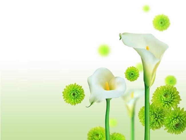Mount Isa Florist: Popular Flowers From Australia