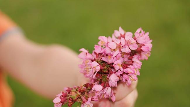 Đóa hoa đẹp nhất