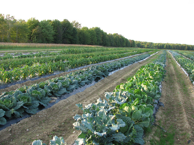 vegetable field september 2012