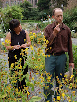 Testing the tootache plant at UW Herb Garden