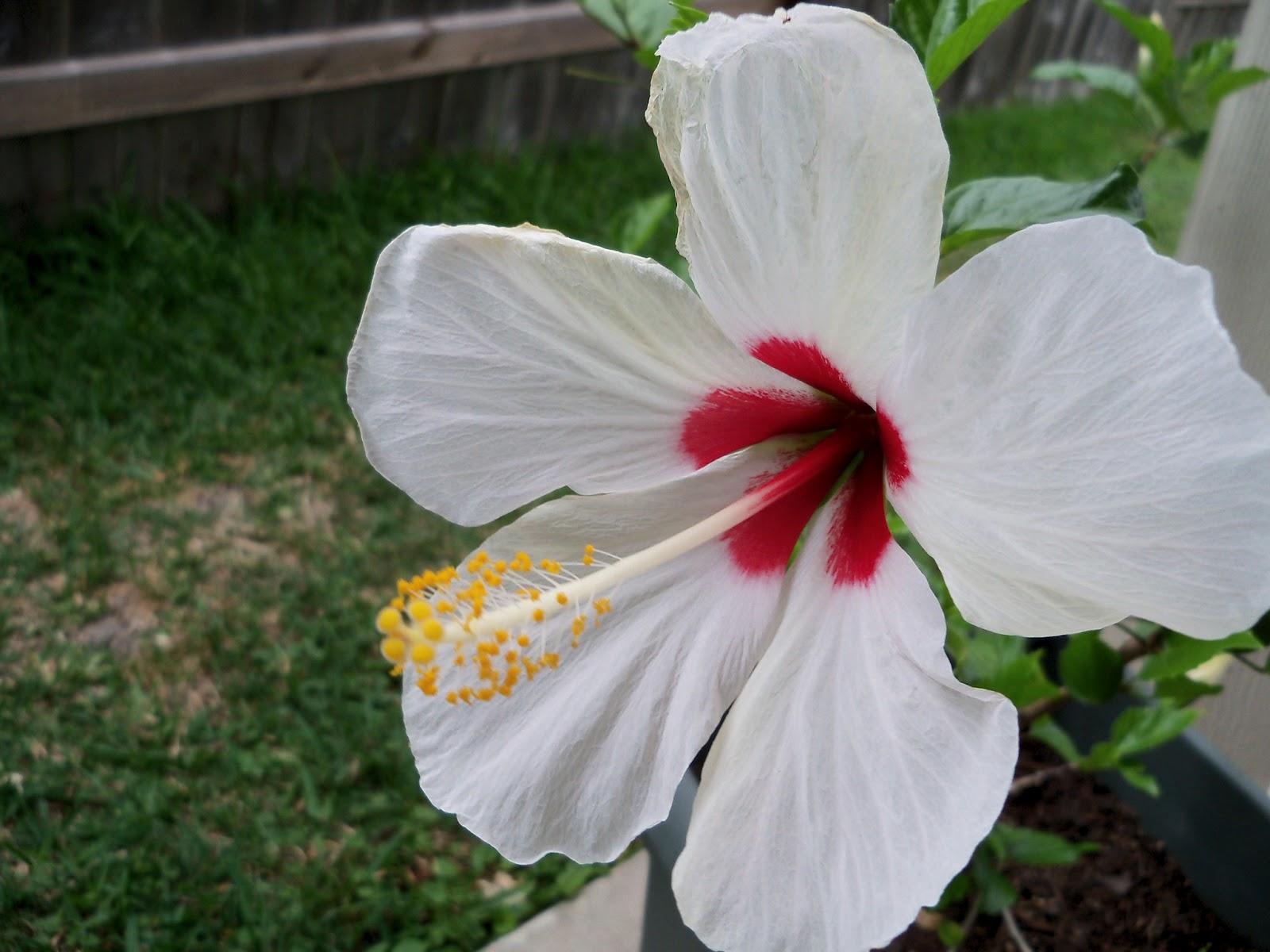 Gardening 2011 - 100_8060.JPG