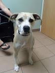 Sadie-Delano-dog-veterinarian-Salem-NH.jpg
