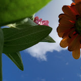 Gardening 2011 - 100_9979.JPG